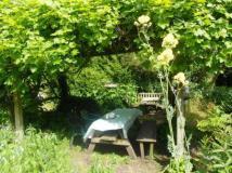 Tea under the grapevine
