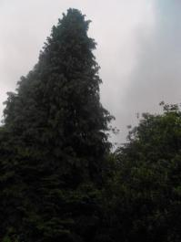This 50 ft tree is right in front of the house.