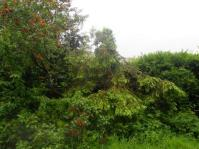 Over grown rear garden