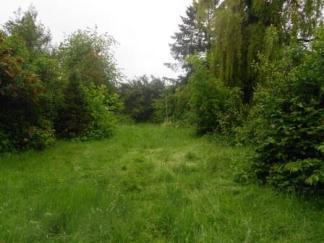 Before -The rear garden