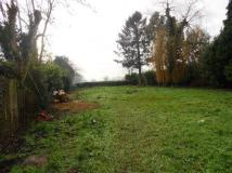 During - the cleared garden