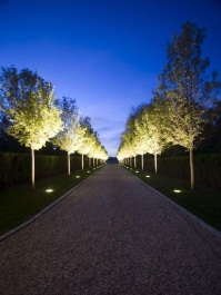 tree Illuminations