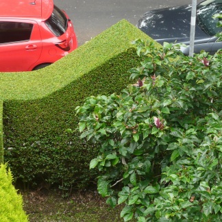 Providing privacy a beautifully trimmed hedge