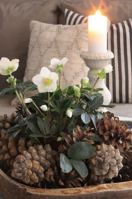 Hellebores and pine cone Christmas arrangement