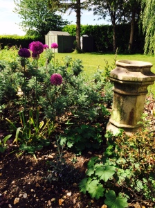 Purple Alliums' and chimney pot in border